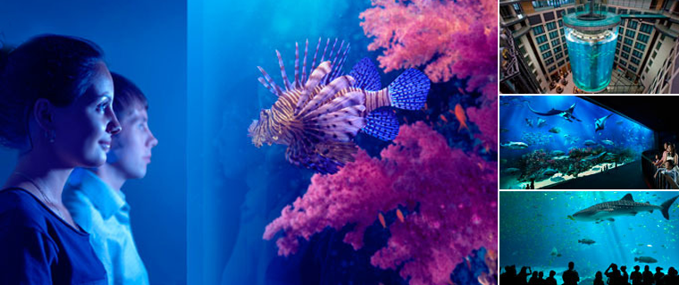 Beautiful aquariums around the world