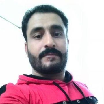 Ali naqvi, 34, Bisha, Saudi Arabia