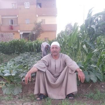 مصر للمصرين, 57, Cairo, Egypt