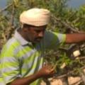الليل الهادر, 46, Ibra, Oman