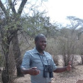 Tanzania Turaco, 30,
