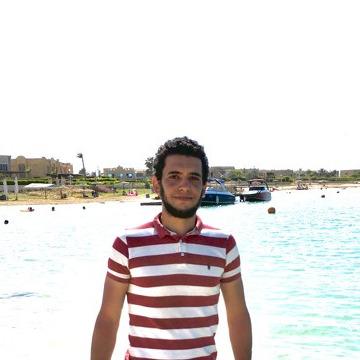 ali, 27, Alexandria, Egypt